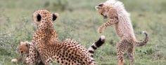 Safari Infinity - Tanzania - Tarangire