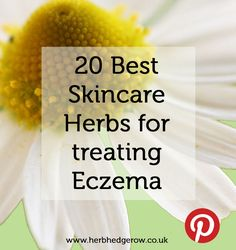 Eczema comes in many different shapes and forms, but is essentially a chronic inflammation of the skin. The word 'eczema' comes from Greek and means 'to boil over' which just about summarises the way inflamed skin can look. There are many botanical extracts which can soothe this inflammation and treat many of the other symptoms associated with eczema. This blog post looks at 20 of the best ones.