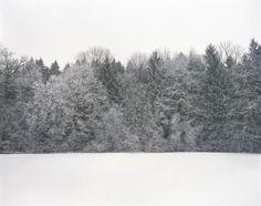 Maurizio Orlanduccio: Wald Triptychon