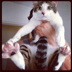 A Vida com Gatos: Primeiros Socorros para Gatos