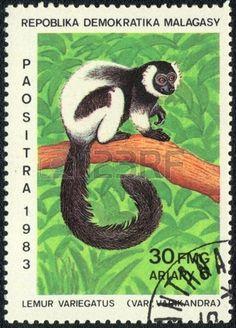 malagasy--circa-1983-a-stamp-printed-in-malagasy-shows-lemur-variegatus-series-lemurs-of-madagascar . stamp Antananarivo lemur Julian native of the island