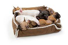 Französische Bulldogge-Welpen in Hundesofa ASPEN SNAPBED