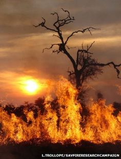 Human Impact on Wildfire in Africa