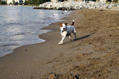 Andrea Sadowski Photography~ Vancouver Pet Portraits