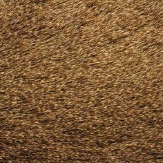 La texture des animaux texture peau poil plume animal 02 800x800