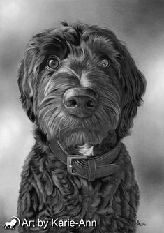 Cocapoo pet portraits from photos in charcoal. Highly detailed dog drawings using fine art materials by award winning animal artist. Commissions undertaken