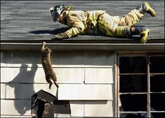 firefighter cat - Google Search