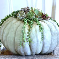 "Kelly on Instagram: ""This pumpkin planter from @stonegableblog doesn't suc (culent)! In fact it's fabulous!"""
