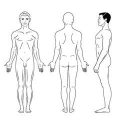Naked standing man vector 650395 - by arlatis on VectorStock®
