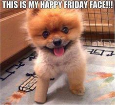 SkunkWire brings you cute and funny animal pictures every day. We got funny cats and cute dogs, plus lots of other funny animal pictures Top 10 Cutest Animals, Cute Funny Animals, Cute Baby Animals, Funny Cute, Funny Dogs, Funny Pitbull, Tgif Funny, Funny Friday, Funny Happy