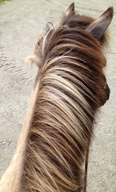 Rich Browns, Beige & Warm Gray Horse Mane, Brown Horse, Warm Grey, Pony, Beige, Horses, Color Palettes, Hair Styles, Dreams