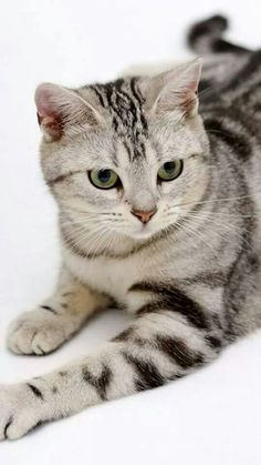 Awesome cat!
