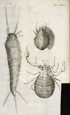 Hooke, Robert, 1635-1703 / Micrographia: or some physiological descriptions of minute bodies made by magnifying glasses : with observations and inquiries thereupon (MDCLXVII [1667]). [page image]