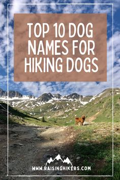 Naming a new pup? Plan to raise an outdoorsy dog who will hit the hiking trails with you? Check out these mountain lover dog names for the outdoorsy dog! We named our Labradoodle, Jasper after Jasper National Park. See the other names that were on our list! #hikingdogs #labradoodle #outdoordognames Hiking Dogs, Hiking Trails, Strong Dog Names, North Cascades National Park, Labradoodles, Mountain Hiking, Family Adventure, Family Dogs, Cool Names