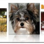 Pictures – About Morkies!