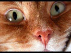 Смешные кошки 20 ● Приколы с животными осень 2014 ● Funny cats vine compilation ● Part 20