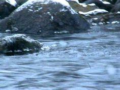 mikko lehtonen  lounto kuvaaja koski luntujen paikka ovat koskilla.AVI (...lentävät koiskilla kivillä ja syövät kaloja