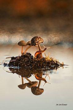 Snail and Mushrooms by Jan Siwmir