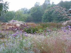 Oudolf ~ Millennium Garden, Pensthorpe, Norfolk, United Kingdom _/////_