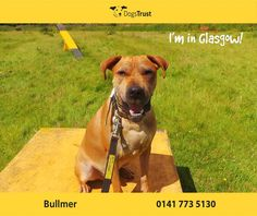 Bullmer at Dogs Trust Glasgow is a handsome chap who loves to play games like fetch. He loves being in the outdoors, going for long walks. Dogs Trust, Take Me Home, Animal Rights, Glasgow, Games To Play, Walks, Handsome, Outdoors, Homes
