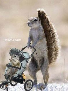In This Funny Post You find 100 Funny Squirrel Pictures and Photos. Funny Squirrel Pictures, Funny Baby Pictures, Animal Pictures, Cute Squirrel, Baby Squirrel, Squirrels, Cute Baby Animals, Animals And Pets, Funny Animals
