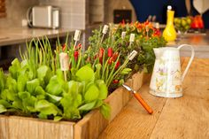Como fazer uma horta de temperos | Decorando Casas Home Vegetable Garden, Agriculture, I Foods, Sweet Home, Healthy Eating, Table Decorations, Vegetables, Plants, Gardening