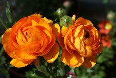 все цветы моего садика