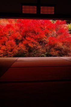 Azalea garden in autumn colors at Ankoku-ji temple, Hyogo, Japan. Photography by hirotie on photohito Japanese Landscape, Japanese Architecture, Japanese Culture, Japanese Art, In Praise Of Shadows, Kobe Japan, Japan Garden, Hyogo, Adventure Is Out There