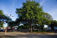 Linda e arborizada - Praça do Centenário
