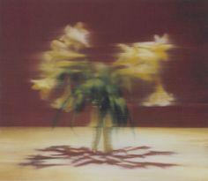 Gerhard Richter - Lilies,  2000, 68 cm x 80cm