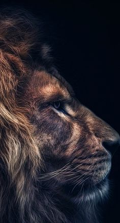 ZdoRodZ Best Picture For Feline anatomy For Your Taste You are looking for something, and it is goin Tier Wallpaper, Dark Wallpaper, Animal Wallpaper, Lion Images, Lion Pictures, Animal Pictures, Beautiful Creatures, Animals Beautiful, Cute Animals