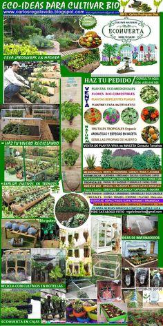 CATALOGO DE MI COSECHA Tropical, Natural, Harvest, Window Boxes, Growing Up, Vegetable Gardening, Flowers, Nature, Au Natural