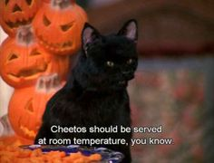 Salem Saberhagen from Sabrina the Teenage Witch (played by Nick Bakay) Sabrina Cat, Salem Cat, Salem Saberhagen, Halloween Snacks, Happy Halloween, Halloween Outfits, Thing 1, Film Quotes, Lyric Quotes