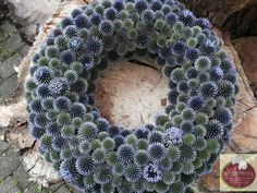 Pretty welcome crown in shabby chic style in blue thistle - BuzzTMZ . - Pretty shabby chic welcome wreath in blue thistle – BuzzTMZ Seashell Crafts, Flower Crafts, Diy F - Seashell Crafts, Flower Crafts, Diy Flowers, Flower Decorations, Deco Floral, Arte Floral, Diy Wreath, Burlap Wreath, Holiday Wreaths