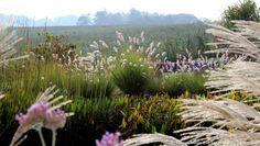 6 graminées colorées et spectaculaires. Les graminées ornementales apportent couleur, légèreté et mouvement dans un jardin.