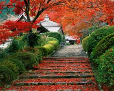 Red Leaves in Osaka by Mohiko