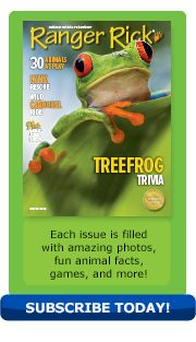 March 2014 issue of Ranger Rick - features a story about treefrogs