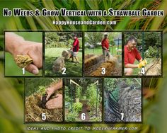 No Weeds & Grow Vertical with a Strawbale Garden