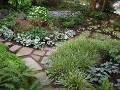 """The Bicycle-Gardening Chronicles...: """"Replace a Shady Lawn"""" Garden--in Autumn"""