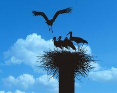 Bald Eagle, Bird, Animals, Animales, Animaux, Birds, Animal Memes, Animal, Animais