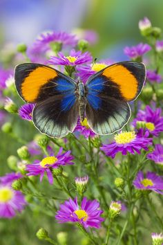 Butterfly and Bountiful Flowers