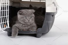 grey kitty Photos photo of gray kittens in carrying case by AlohaHawaii