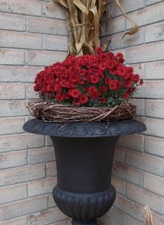 FALL MUMS .. Thanks Lacey's Country Home  http://www.facebook.com/LaceysCountryHome