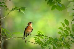 the singer by wise photographie on 500px