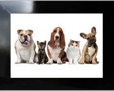 **QUADRO DECORATIVO - DOGS AND CATS 2