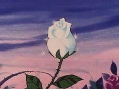 blooming cartoon rose flowers animated cartoons animation rose