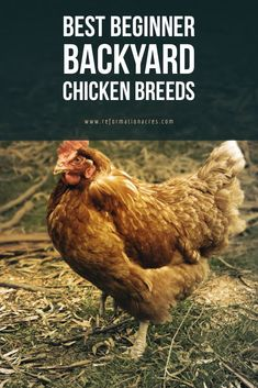 Best Backyard Chickens 2020 That's true, contemporary living has actually imposed itself in nearly every facet of our lives, and also it didn't go beyond also best backyard chick. Backyard Chicken Coop Plans, Diy Chicken Coop, Backyard Chickens, Backyard Farming, Backyard Poultry, Chicken Breeds For Eggs, Chicken Toys, Chicken Pen, Urban Chickens