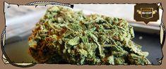 Order Real #Weed Online - Buy #WeedStrains #PINEAPPLEKUSH Now!