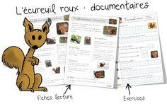 Fiche documentaire : l'écureuil roux | Bout de Gomme