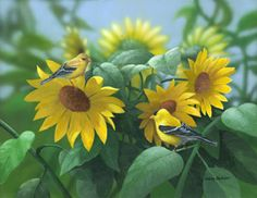 """""""Sunflowers"""" - American Goldfinches"""